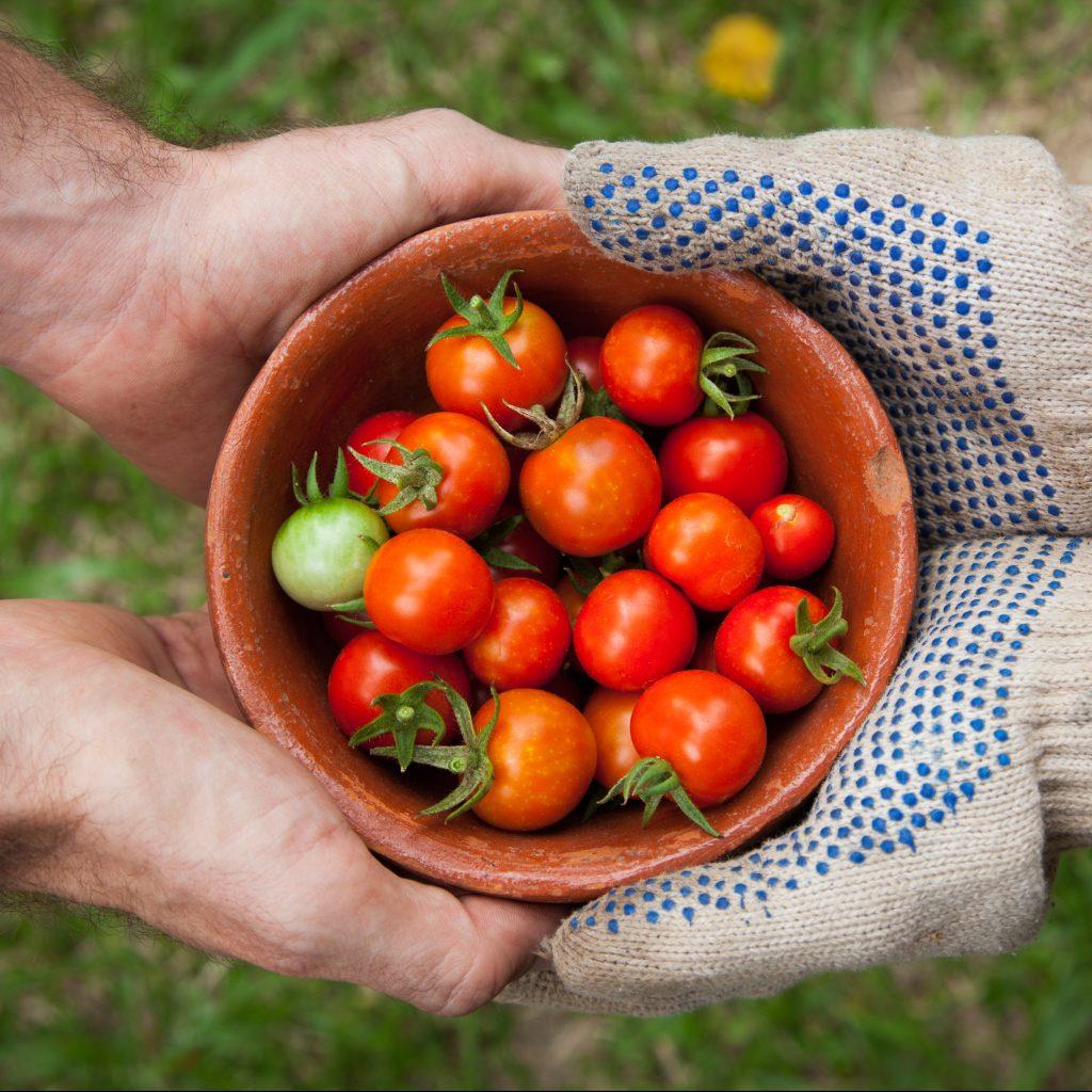 Testament, Hände, Tomaten