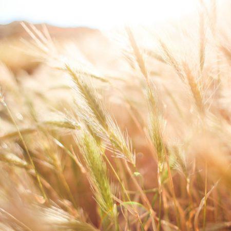 ernährungs- und landwirtschaftspolitik