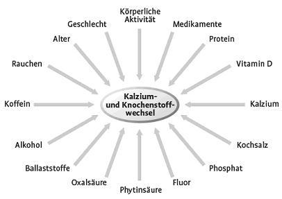 Calcium- und Knochenstoffwechsel