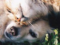 Tiere & Tierbedarf