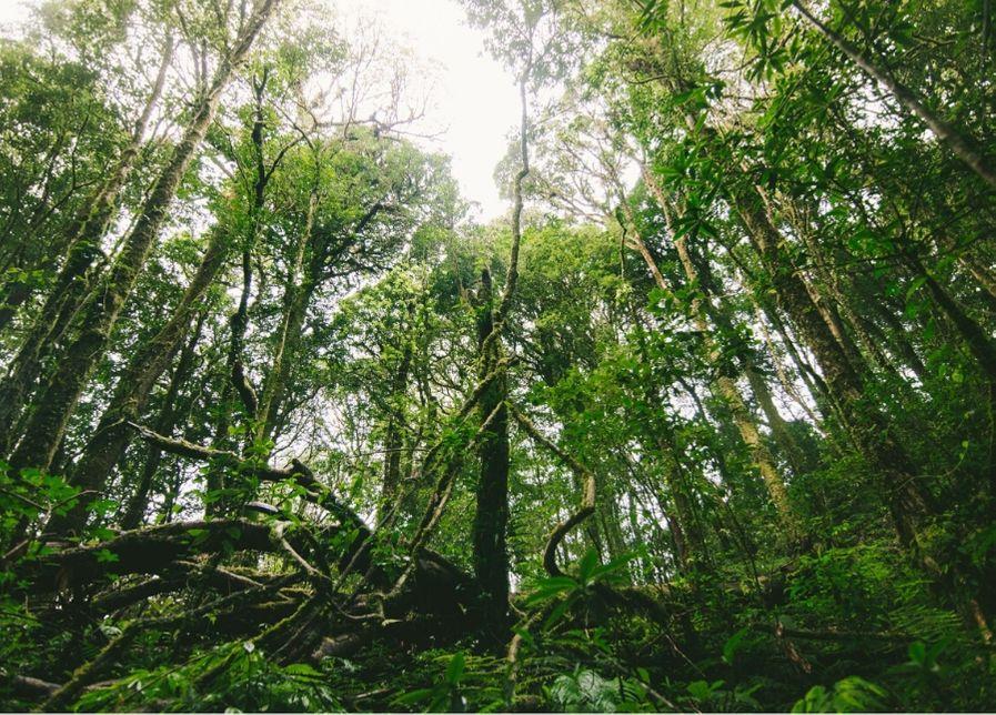 gandería destruye bosques