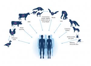 ejemplos enfermedades zoonóticas
