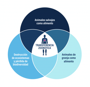 gráfico transferencia zoonótica