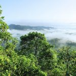 Picture of the Amazonie Forest