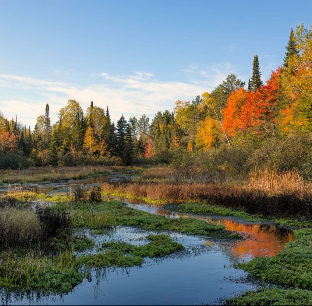 picture of a forest and a lake