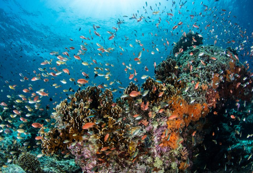 fish in a reef - biodiversity day