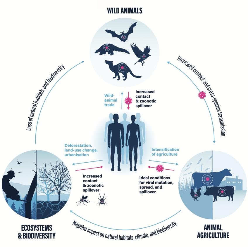 food and pandemics
